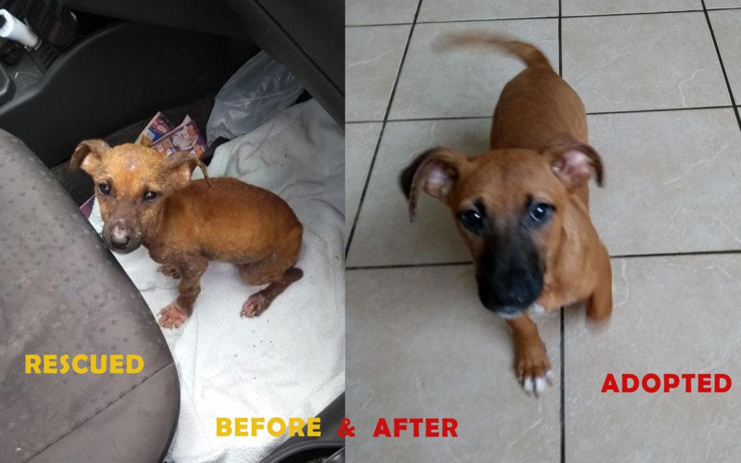 Princesa foi adotada!!